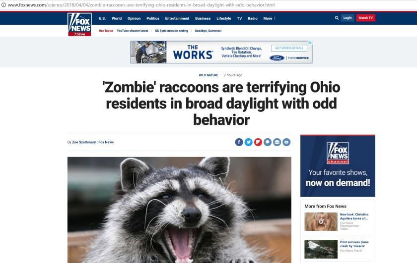 Zombie Racoon